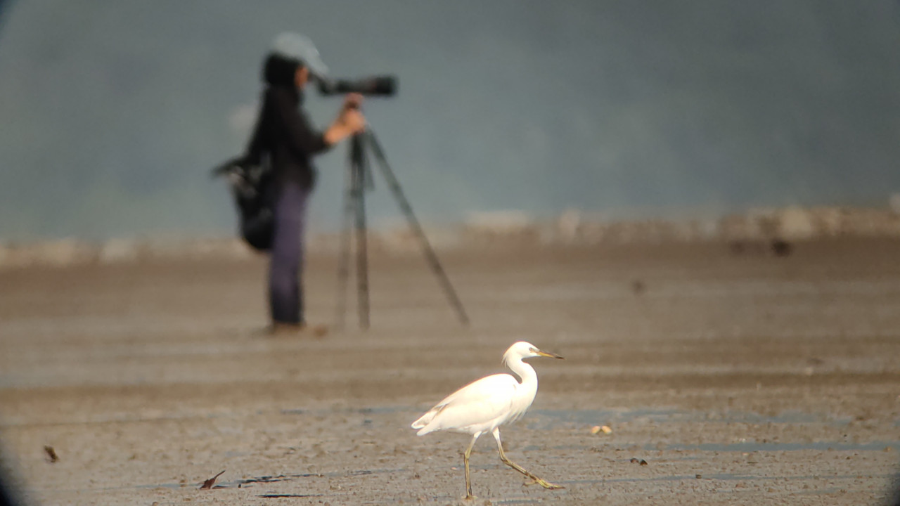 Watching shorebirds next to a Chinese Egret. – Pic by Ng Jia Jie